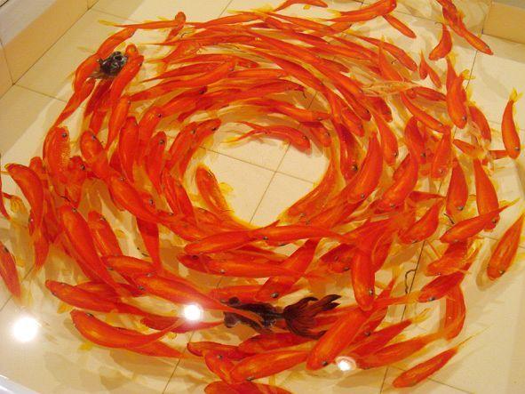 [動画] 金魚を超えた金魚のアート、深堀隆介さんのアクリル樹脂の金魚