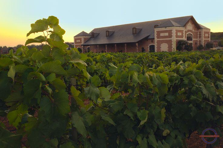 15 Best Delaney Vineyards Images On Pinterest Vine Yard