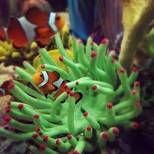 Image result for ripley's aquarium toronto inside