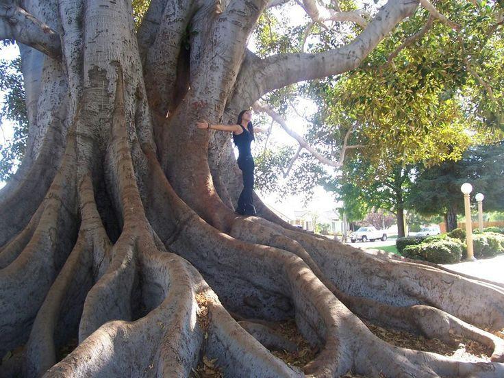"""Big tree park"" Glendora California. | Family travel ..."