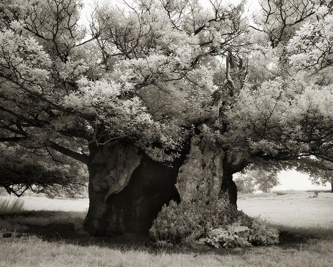 Photo Beth Moon - Portraits of Time: Ancient Trees