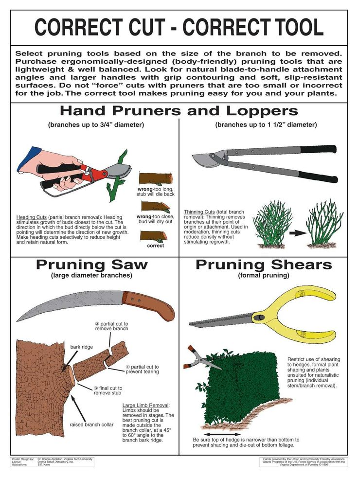 849 best gardening images on pinterest gardens backyard for Gardening tools pruning