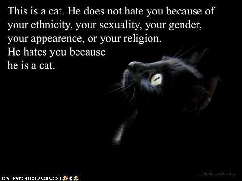 """From a fan. As they say, """"true story.""""Cat Hate, Laugh, Quote, So True, Funny Stuff, Humor, Things, Kitty, Animal"""