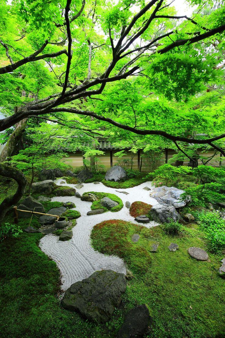 鮮やかな緑につつまれた京都のもみじの名所の永観堂の中庭                                                                                                                                                     もっと見る