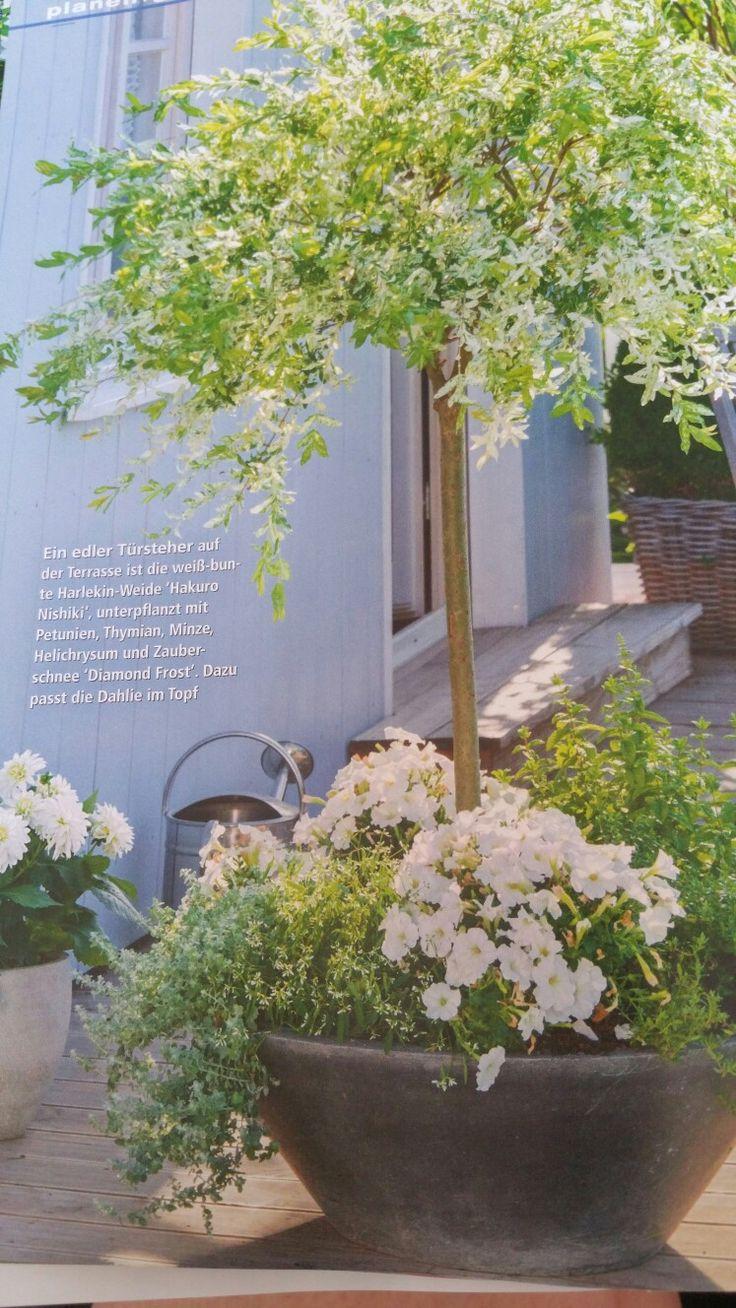 die besten 25 petunien ideen auf pinterest petunie blume blumengarten und schwarze blumen. Black Bedroom Furniture Sets. Home Design Ideas
