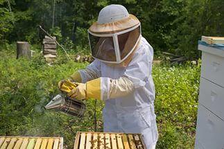 маска пчеловода: 21 тыс изображений найдено в Яндекс.Картинках