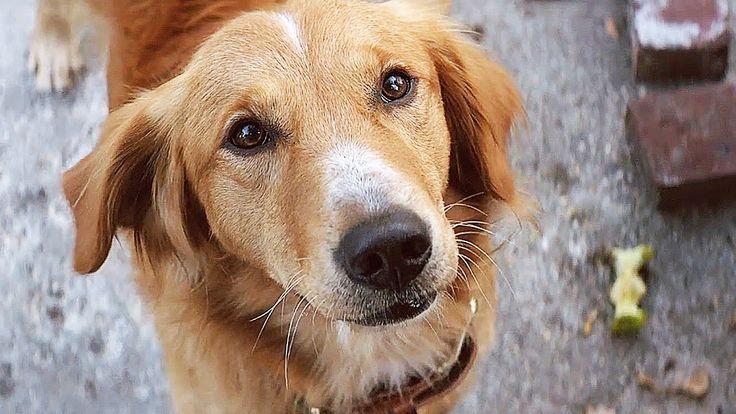 A DOG'S PURPOSE Official Trailer (2017) Britt Robertson Movie - https://www.best-art.xyz/a-dogs-purpose-official-trailer-2017-britt-robertson-movie/