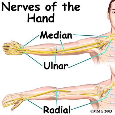 Hand Anatomy, Median, Radial, Ulnar Nerves