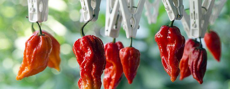 Da li želite znati više o #ukusnoj hrani? Skala ljutine u #paprikama