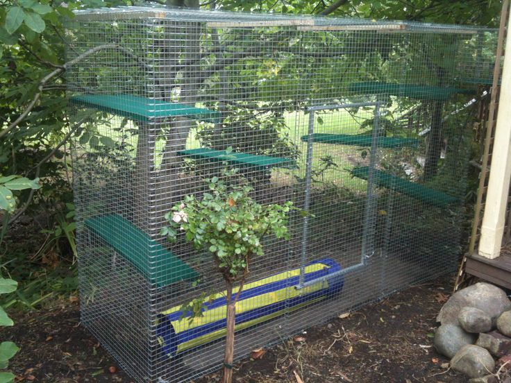 Portable Outdoor Dog Enclosures : Best images about cat enclosures on pinterest cats