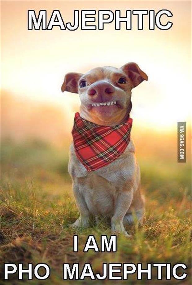 89 best Lisp Meme Dog images on Pinterest   Tuna dog ...