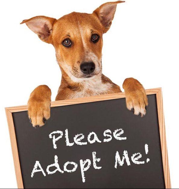 Http Www Hoovesandpaws Org Adopt Html Pet Adoption Pets Adoption