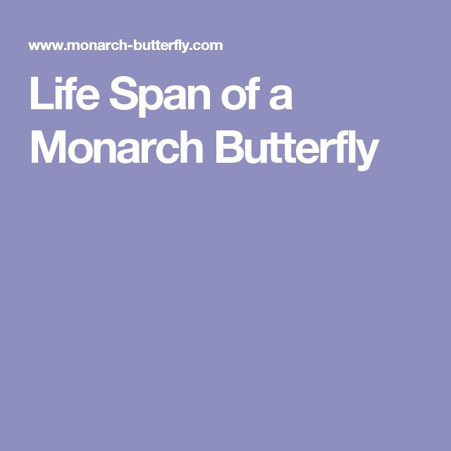Life Span of a Monarch Butterfly