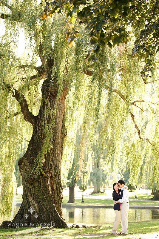 Boston Public Garden Photos
