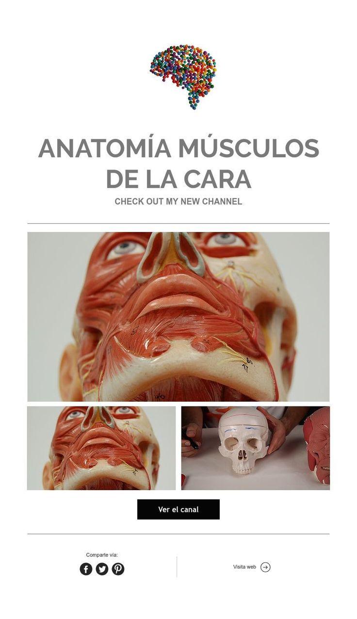 Vistoso Web Anatomía Universidad De Minnesota Imagen - Anatomía de ...