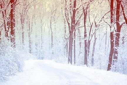 Gallery For > Tumblr Winter Backgrounds | Woodland and ...