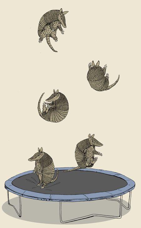 trampolining armadillos #whimsical #illustration