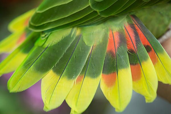Amazon parrot feathers http://etireid.artistwebsites.com/featured/amazon-parrots-feathers-abstract-eti-reid.html