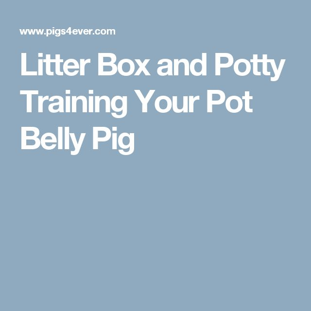 Litter Box and Potty Training Your Pot Belly Pig