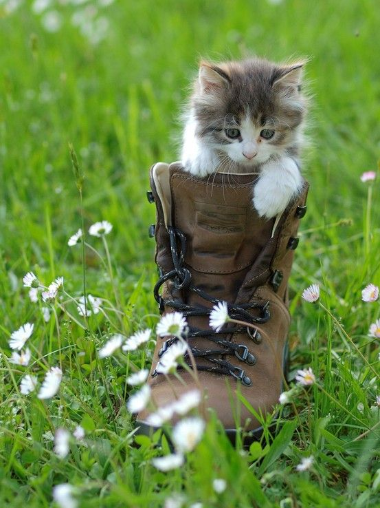 Makes me want a sweet little kitten., like the old days in the country.