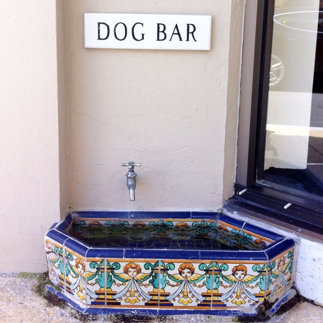 Worth Ave., Palm Beach...I loved the dog bars. Every town should have them:)