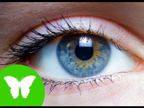 ▶ La Eduteca - Los sentidos: la vista - YouTube
