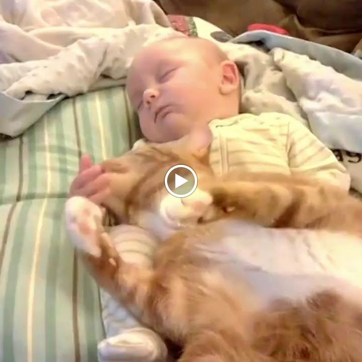 Cats love babies! At least until they can chase them around the house! This is so cute!