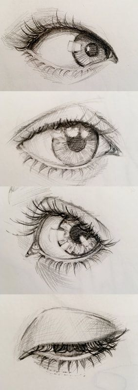 Pencil eye study - drawing realistic looking eye study (anatomical). Aya Devin Illustrations
