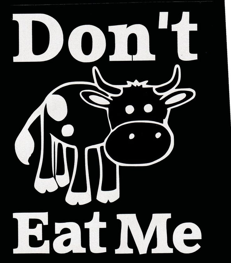 Vegan dont eat me cow white decal sticker unbranded cow vegan animalrights