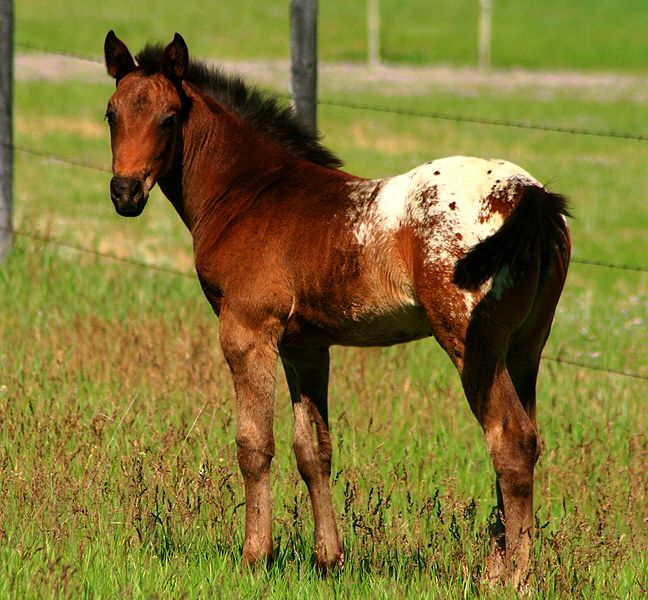 84 Best Some Of My Favorite Breeds Of Horses Images On -2688