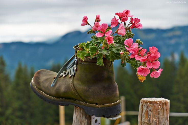 But, Bukiet, Kwiatów, Płot, Ogrodzenie