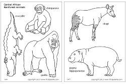 African rainforest animals