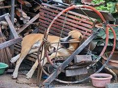Aus dem Leben eines Wachhundes