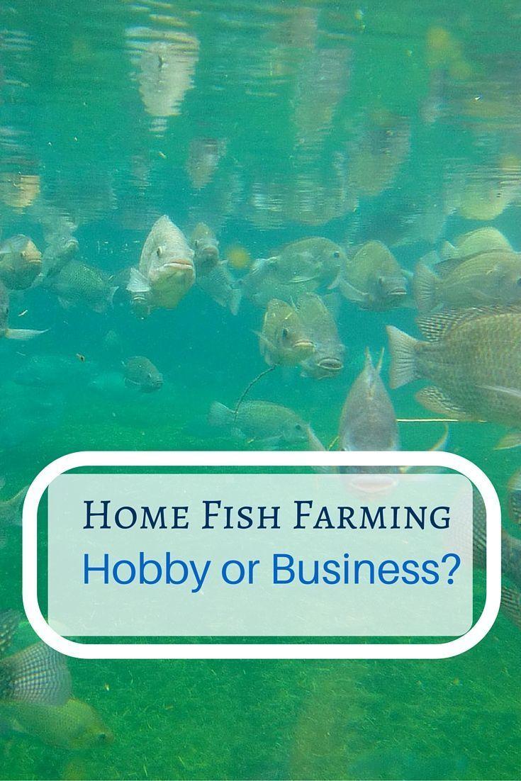 86 best sustainable aquaculture images on pinterest fish farming
