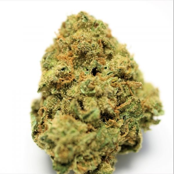 Moby Dick -  Originating in Amsterdam Moby Dick's high THC content makes it one of the strongest sativas out there. The aroma is a sweet citrus from the Haze, which dominates the palate with vanilla and eucalyptus tones.