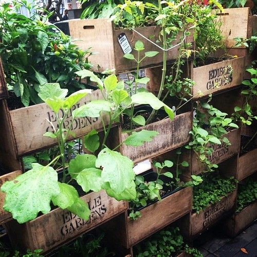 Verticale kruidentuin - Rustic edible vertical garden  #outdoors