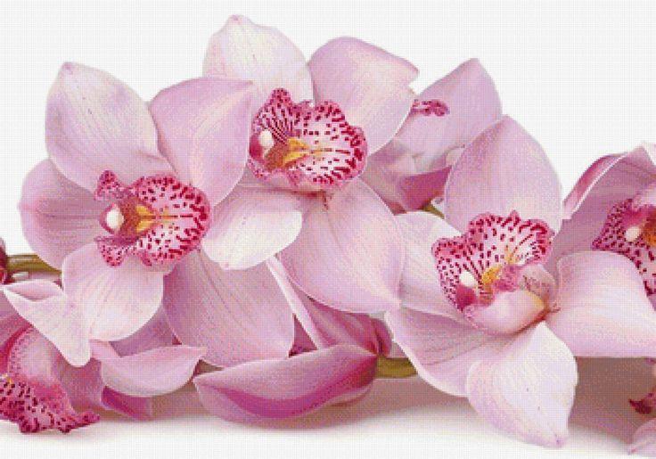 Предпросмотр схемы вышивки «Розовые орхидеи»