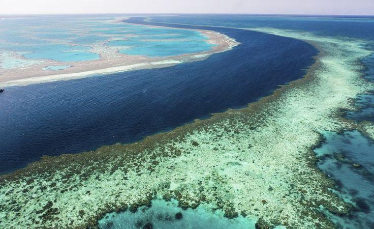 La Gran Barrera de Coral  Considerado como el arrecife de coral más grande del mundo, emplazado en la costa de Australia, en menos de tres décadas este arrecife perdió la mitad de sus especies autóctonas. Si sigue la misma tendencia en pocos años desaparecerá dejando en su lugar un enorme esqueleto de coral yermo. Las causas, según los expertos, son el aumento de las temperaturas, las tormentas tropicales cada vez más frecuentes y una estrella de mar invasora muy violenta que se alimenta del…