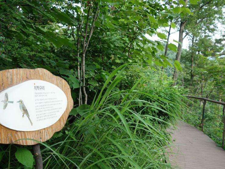 산책로를 따라 설치된 나무, 새 등에 대한 안내표지판이 자연학습장으로서의 역할을 합니다.