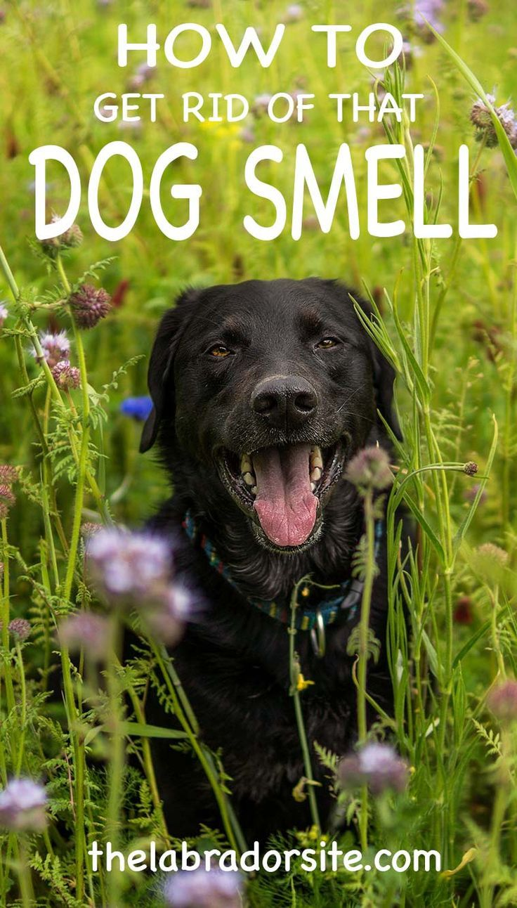 How to get rid of dog smell from your home @KaufmannsPuppy