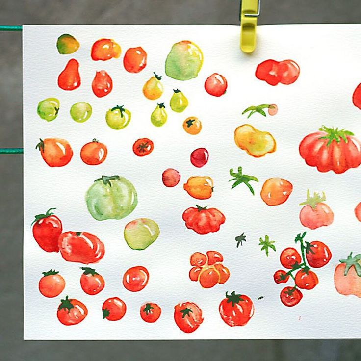 All of this tomato sketching is making me hungry  #watercolour #tomatoes #realfood #stilllife #paintlife #WatercolourWednesday