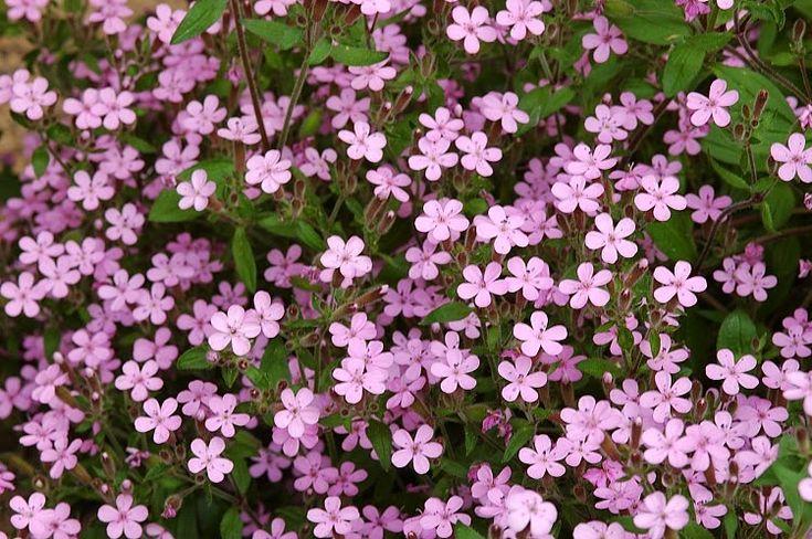 Le piante tappezzanti  fanno parte della famiglia delle erbacee perenni   e sono tutte quelle piante che hanno la caratteristica di sv...