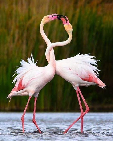 Flamingos #jasoncampbellstudio