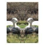 Alpaca mirror letterhead