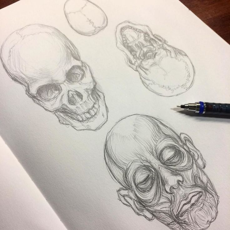 Anatomy study... skull and facial muscles   #sketch #drawing #sketchbook #skull #anatomy #pencil #muscles #face #practice