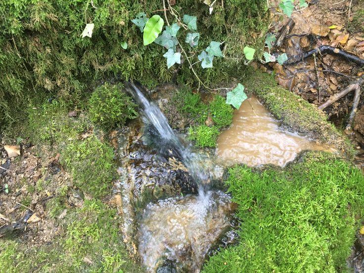 Source en dessous de l'ancien château de Mantry (Jura)