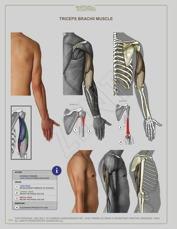 580 besten Anatomy Bilder auf Pinterest | Drawing, Skizzen und Zeichnen