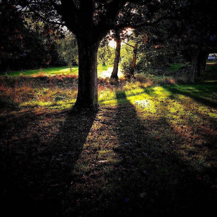 Beautiful evening. #sunset #sun #light #shadow #shadows #trees #landscape #evening #fall #autumn #autumnsun #sunshine #olloclip #beaniedee #iphone6s