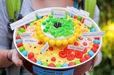 Eukaryotic cell cake