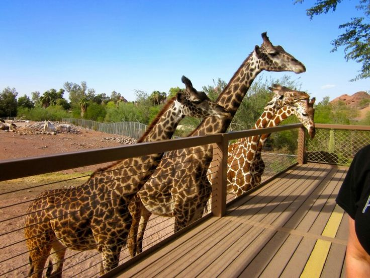 Phoenix zoo coupons discounts